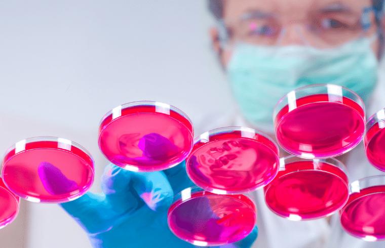 Vantagens do uso de culturas celulares de insetos para a produção de proteínas recombinantes