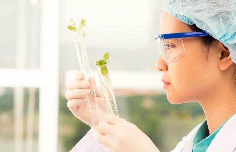 Produtos vegetais em investigações biomédicas: Os flavonóides