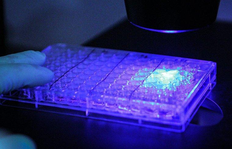 Proteínas fluorescentes